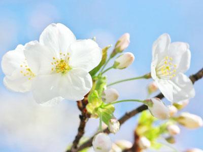 4月はフレッシュ |京都・滋賀リフォームするならフジ・ホーム