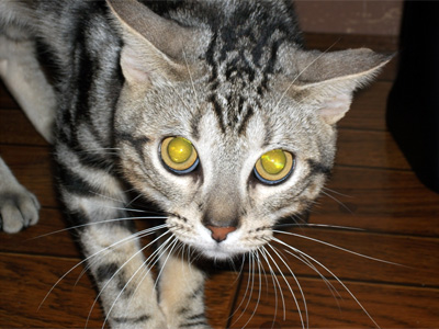 我輩は猫である|京都・滋賀でリフォームするならフジ・ホーム スタッフブログ