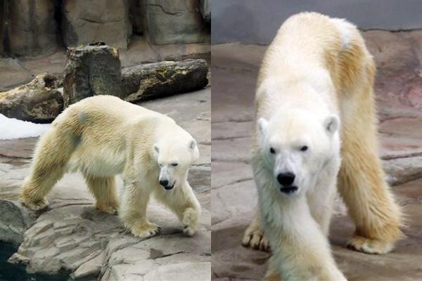 王子動物園|京都・滋賀でリフォームするならフジ・ホーム スタッフブログ