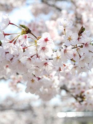 春モードへ |京都・滋賀リフォームするならフジ・ホーム