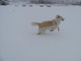 雪にはしゃぐせんべい_6099