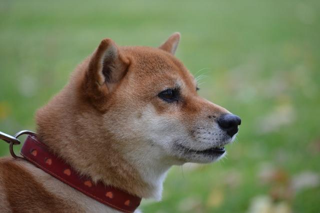 2012年10月28日お散歩会5
