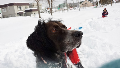 大雪散歩9