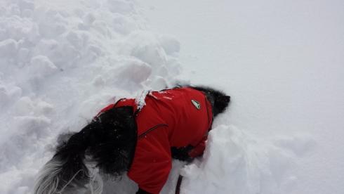 大雪散歩8
