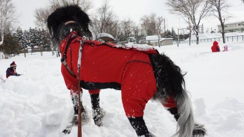大雪散歩6