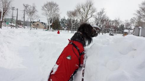 大雪散歩5