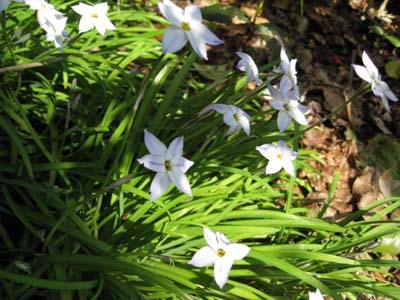 庭の花たち2