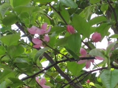 庭の花たち3