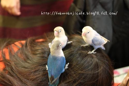 3羽でスリスリ