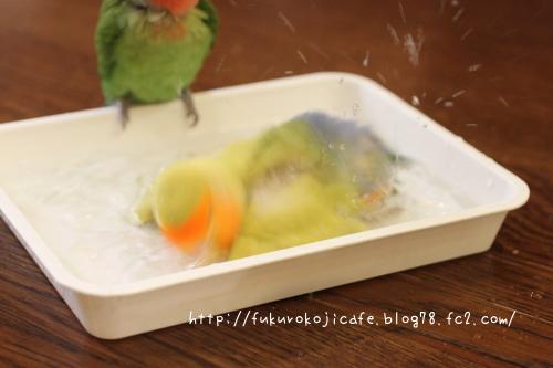 激しい水浴び