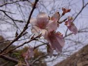 ichiba_5_20121213233340.jpg