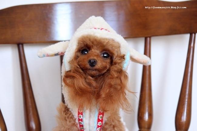モコ羊さんー2