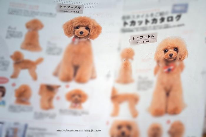 愛犬の友新春号-1