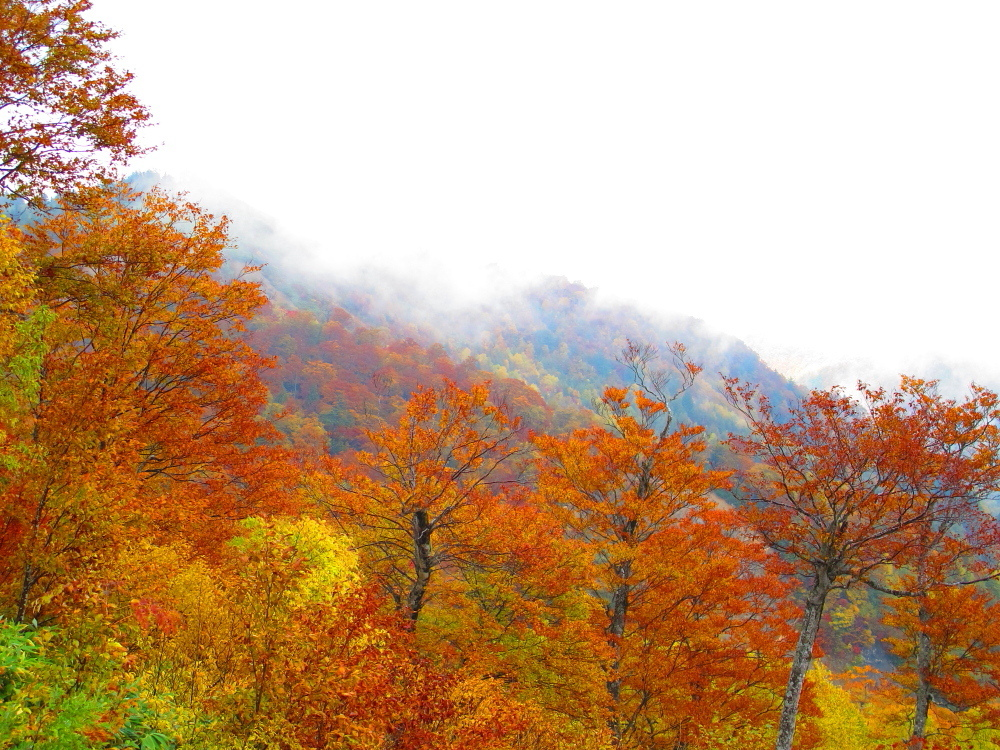 20121021_skyvalley.jpg