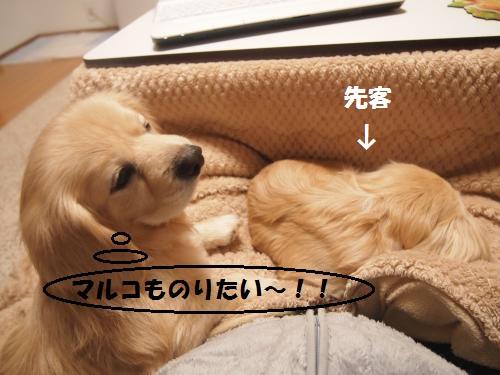 001_convert_20130111205529.jpg