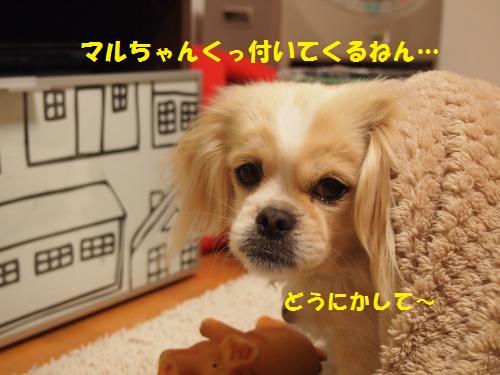 001_convert_20130121224323.jpg