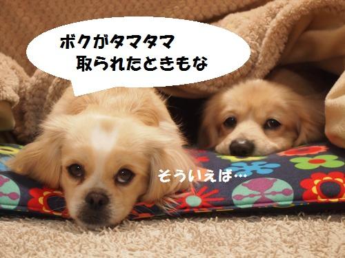 001_convert_20130201221153.jpg