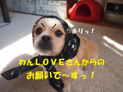 001_convert_20130305183114.jpg