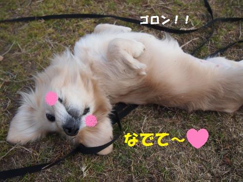 002_convert_20130111205549.jpg
