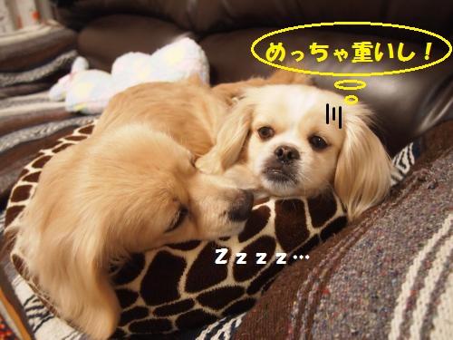 002_convert_20130118213654.jpg