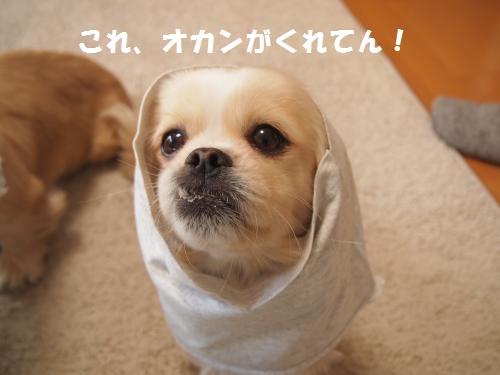 003_convert_20130214230137.jpg