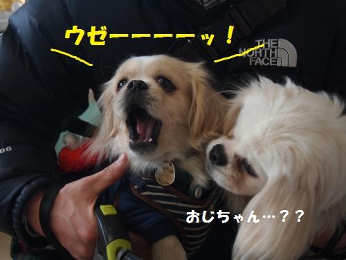 005_convert_20130106221144.jpg