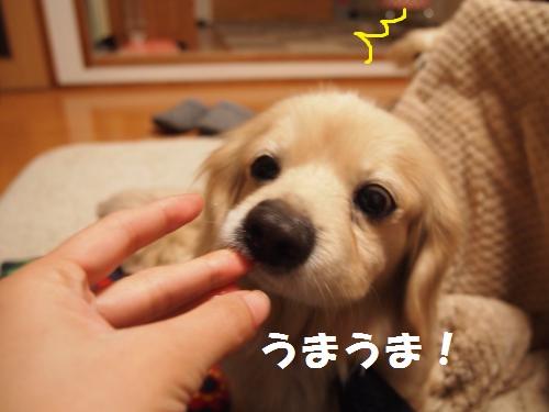 005_convert_20130128225947.jpg