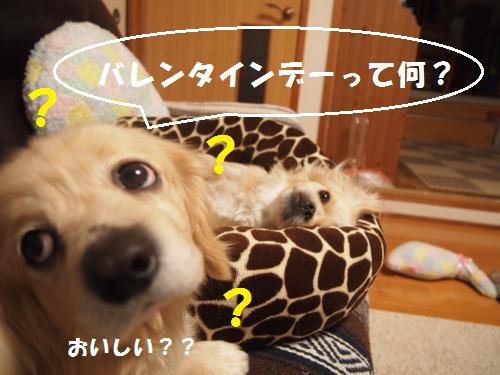 005_convert_20130213225039.jpg