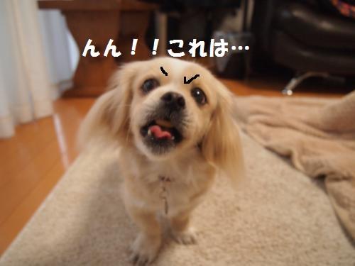 006_convert_20121226010351.jpg