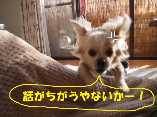 007_convert_20121229204802.jpg