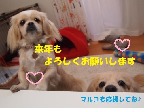 008_convert_20121231203246.jpg