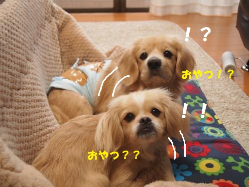 008_convert_20130205225755.jpg