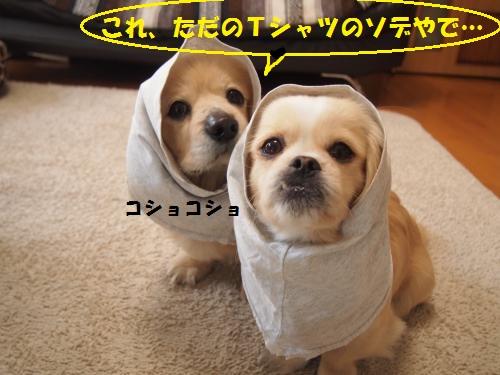 008_convert_20130214230418.jpg