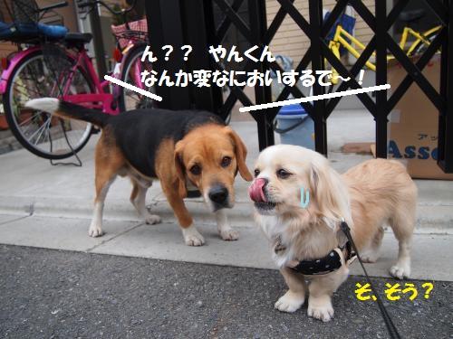 008_convert_20130329220933.jpg