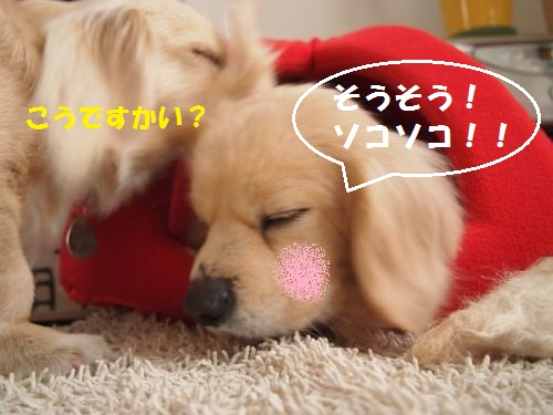 009_convert_20130207221124.jpg