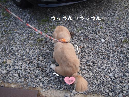 010_convert_20130107221035.jpg