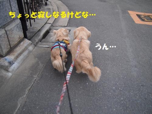 011_convert_20130217231824.jpg