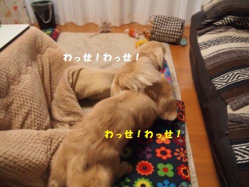 012_convert_20130122213441.jpg