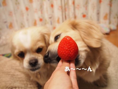 013_convert_20130211215239.jpg