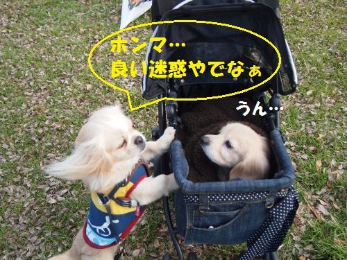 014_convert_20130110213251.jpg