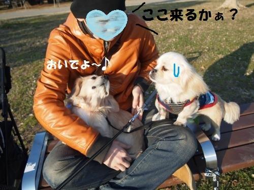 014_convert_20130112220429.jpg
