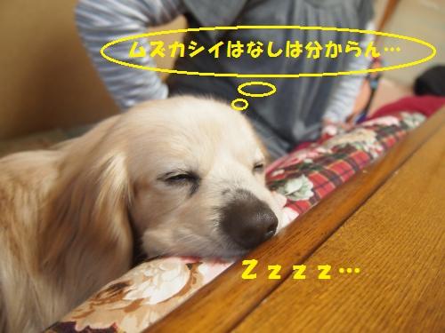 015_convert_20130218220701.jpg