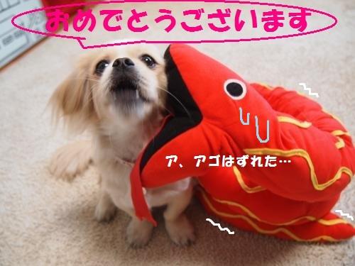036_convert_20130102111732.jpg