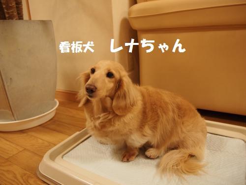 044_convert_20130104234209.jpg