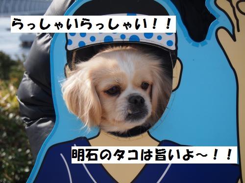 070_convert_20130105191639.jpg
