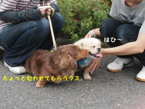 P7223934_convert_20120722193808.jpg