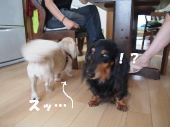 P7223942_convert_20120722193938.jpg