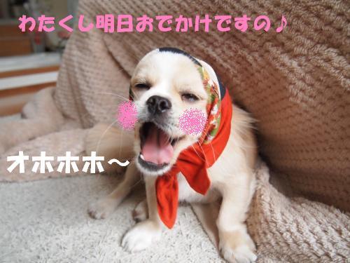 PA275990_convert_20121027211728.jpg