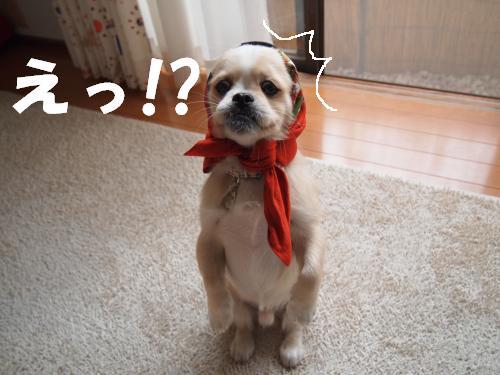 PA275992_convert_20121027211801.jpg