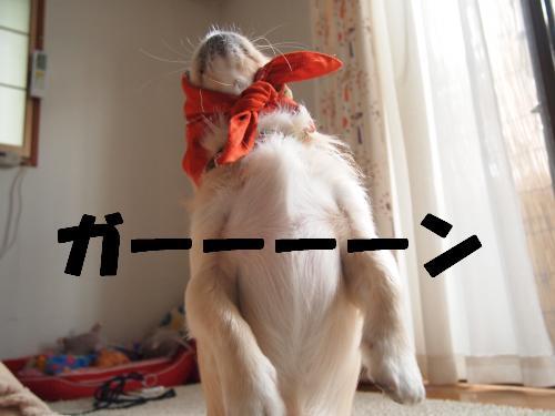 PA275998_convert_20121027211830.jpg